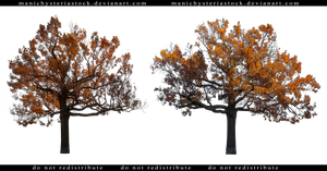 Autumn Oak Tree Cut Out by ManicHysteriaStock