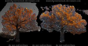 Autumn Oak Tree Cut Out