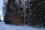 Winter Forest 15