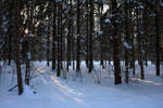 Winter Forest 18