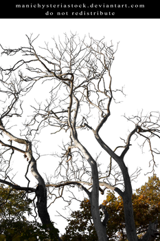 Branches Cut Out