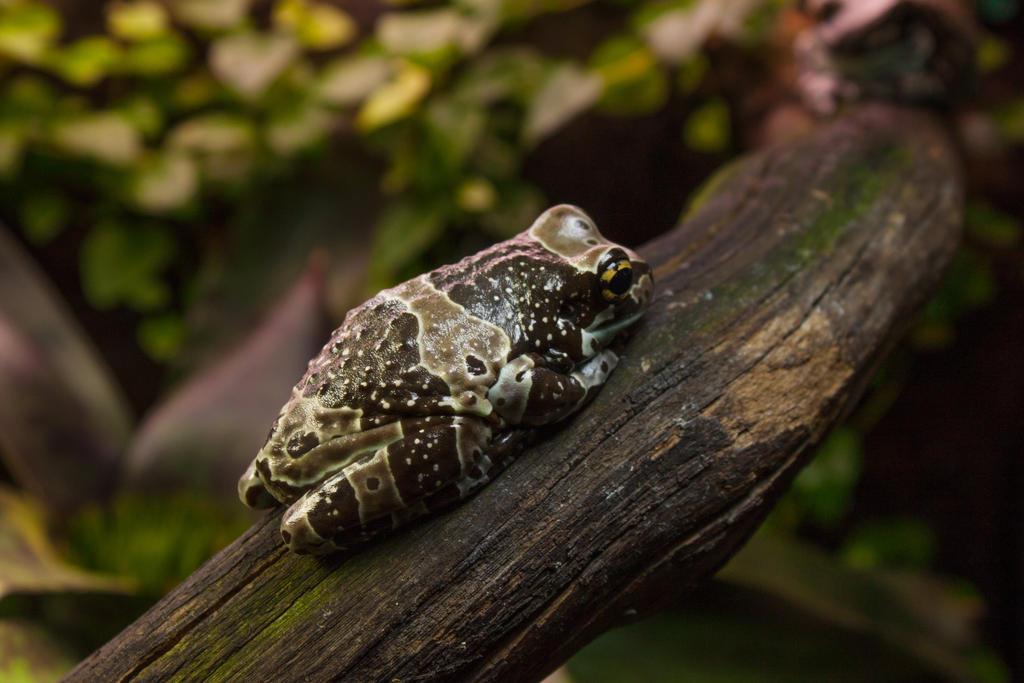 Frog by ManicHysteriaStock