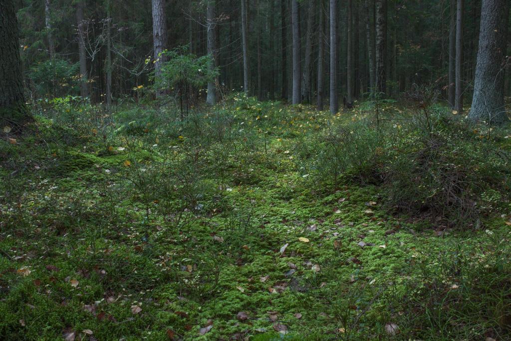 Autumn Forest Moss