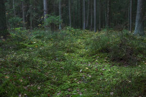 Autumn Forest Moss by ManicHysteriaStock