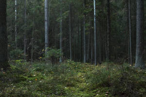 Autumn Forest Moss 2 by ManicHysteriaStock