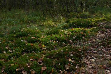 Autumn Forest Moss 3 by ManicHysteriaStock