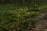 Autumn Forest Moss 3