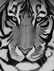 TIGERRRR by sinsenor