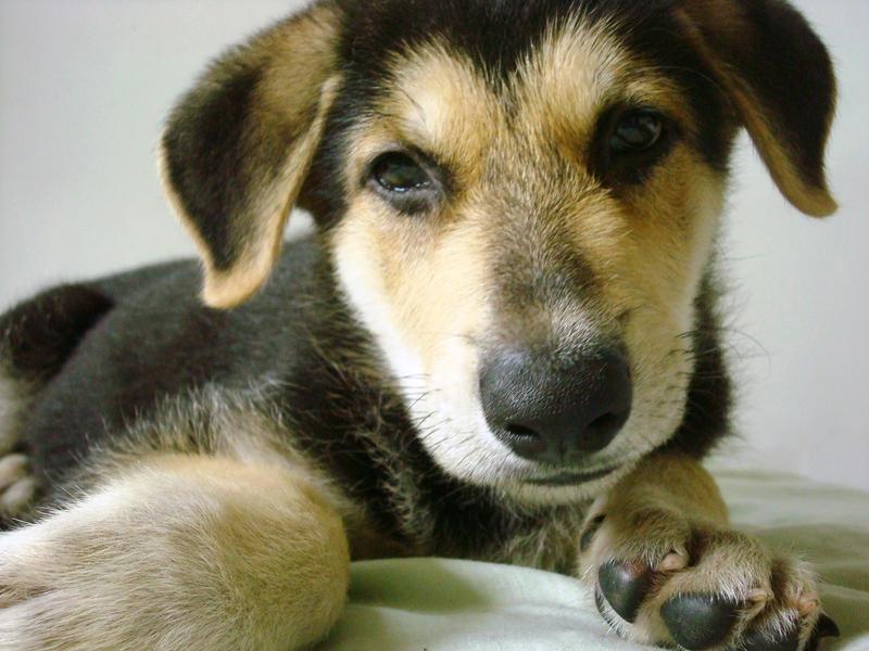 cute little dog by sinsenor