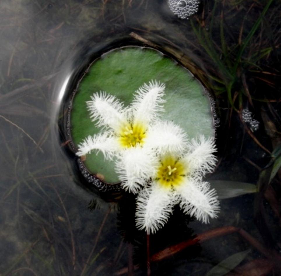 WILD FLOWER by sinsenor