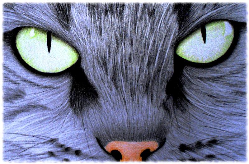 sinsenor's Profile Picture