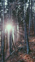 Sunset hiking #2