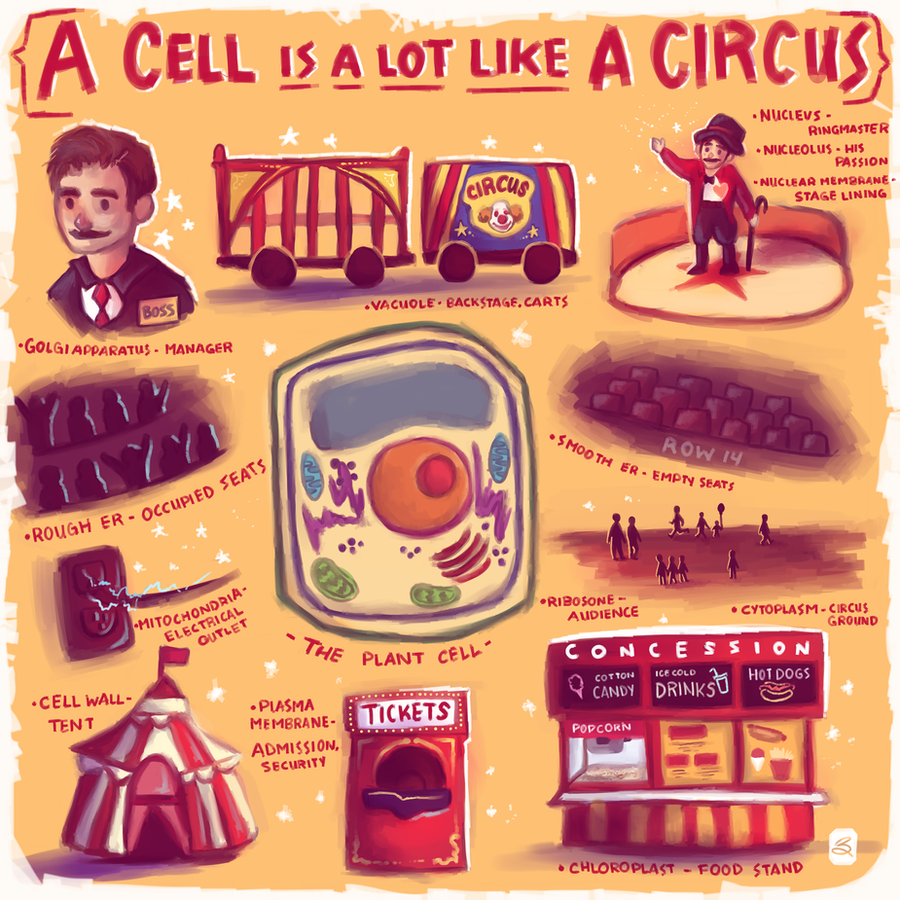 analogy of a cell