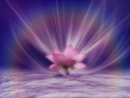078 Pink Lotus Rainbow by Tigers-stock