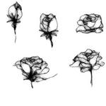 132 rose2