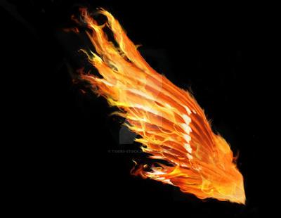 505 pheonix wing