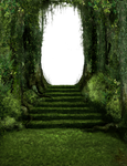 686 Forest Steps