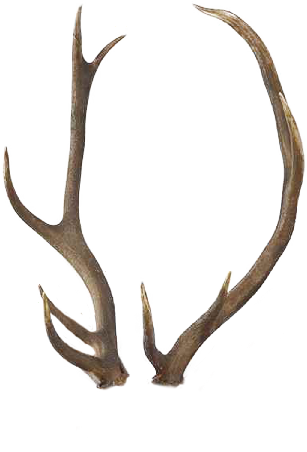 transparent reindeer antlers www imgkid com the image free clipart rudolph the red nosed reindeer rudolph clip art black and white