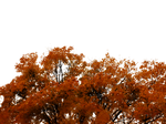 762 Autumn Tree Cutout 01