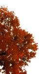 763 Autumn Tree Cutout 02