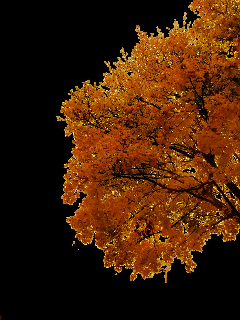 764 Autumn Tree Cutout 03 by Tigers-stock on DeviantArt