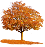765 Autumn Tree