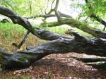 1009 Tree Branch 02