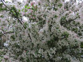 1057 Blossom 01