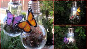 Fairy Bulbs