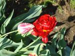 Flower loves flower