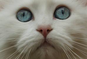 Blue eyes by kikielzinga