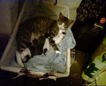 cats by sSflowerSs