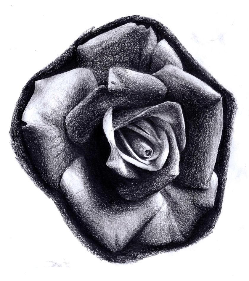 Realistic Rose Tattoos Black And White   www.imgkid.com ...