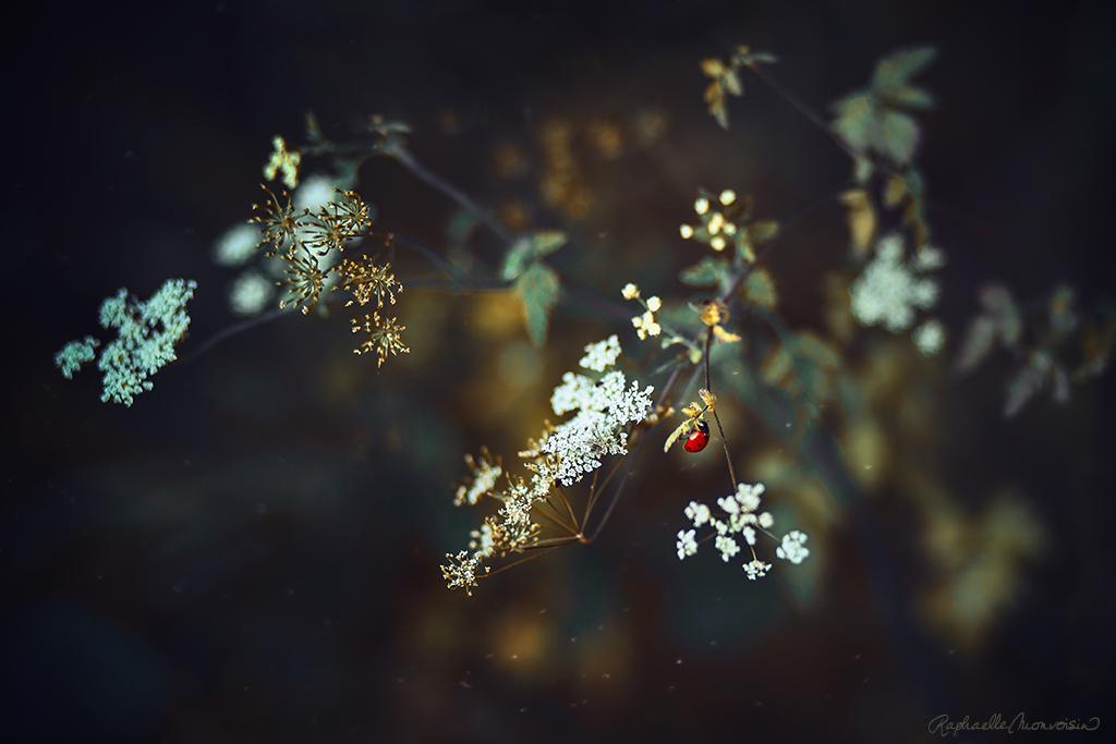 Lady Bloom by RaphaelleM