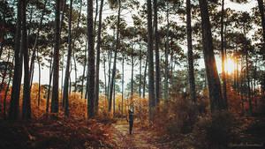 A Forest I Belong by RaphaelleM