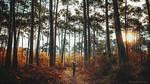 A Forest I Belong