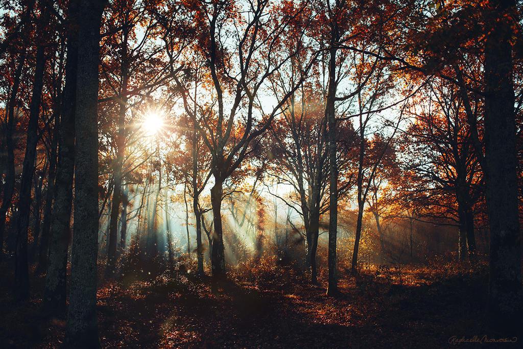 Falling Sol by RaphaelleM
