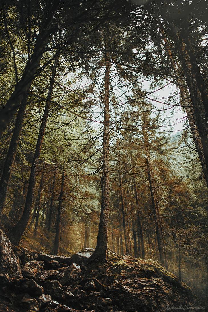 Woodland King by RaphaelleM