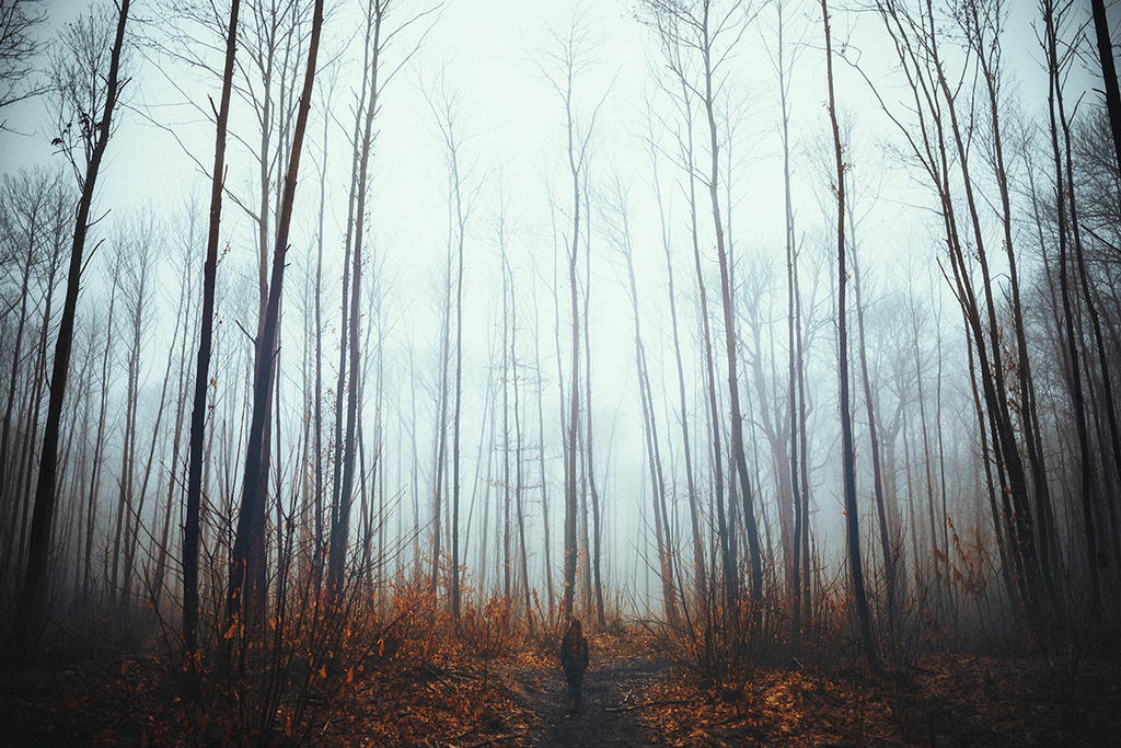 Pathway to Winter by RaphaelleM