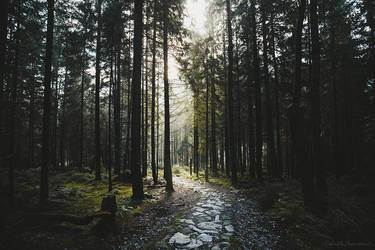 The Lost Wood Path by RaphaelleM
