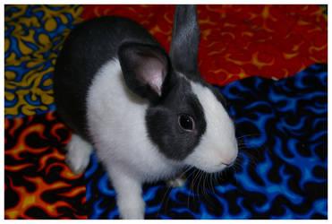 Felix by bunnyclub
