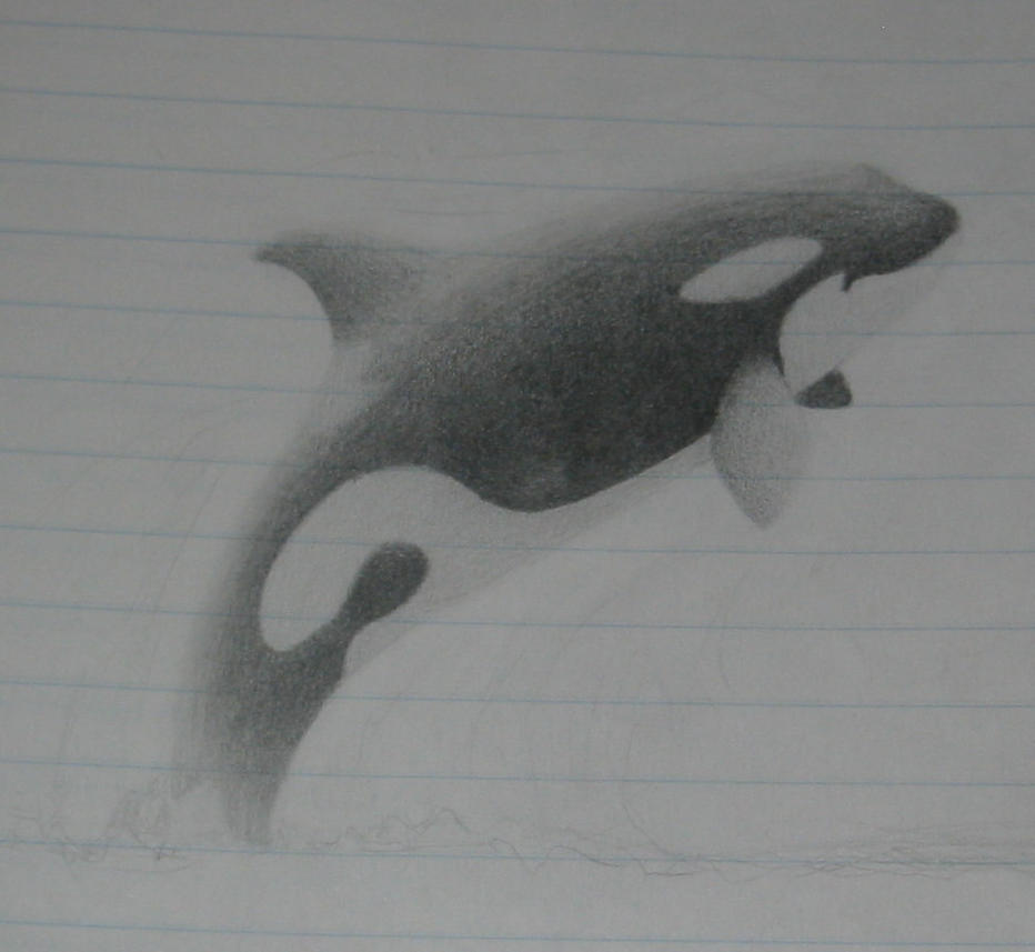Orca Jumping Drawing Orca Jumping by Orcachick2005