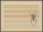 Lycosa Monticola Spider Wallpaper