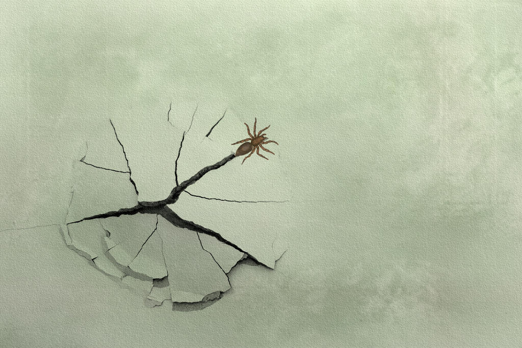 Spider in a Paint Blister by Chlodulfa