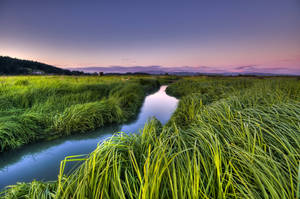 Grasslands by dalbke