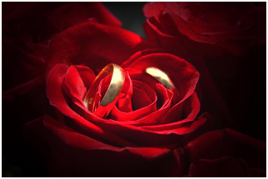 wedding rings rose edition by PoisonedStrawberry on DeviantArt