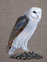 Acrylic Barn Owl Painting Behold by aryalynx