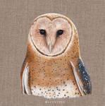 Acrylic Barn Owl Felix
