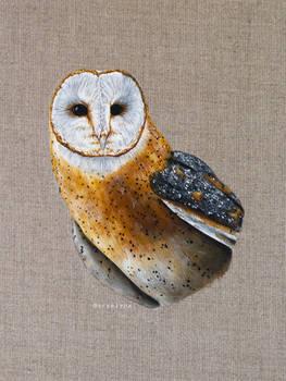 Acrylic Barn Owl Ivo