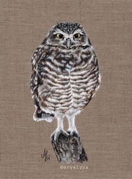 Acrylic Little Owl Filip